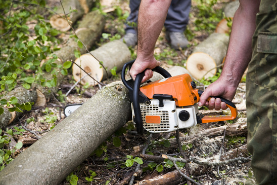 Photo of Forest Management on Tree Cutting