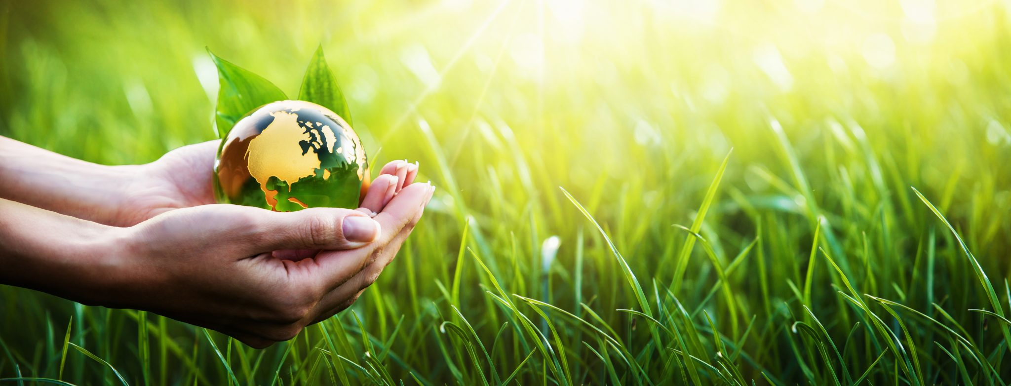 Who Should Get ISO 14001:2015 Certified?